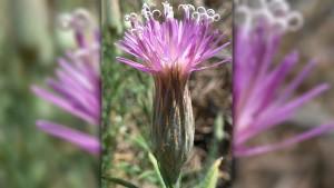 thumbs_çöl-çiçeği- urfa- da- açtı-- 15- yıl- sonra- yazı- atölyesi